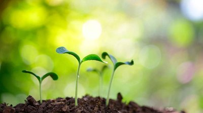Convocatoria Medioambiente y Desarrollo Sostenible